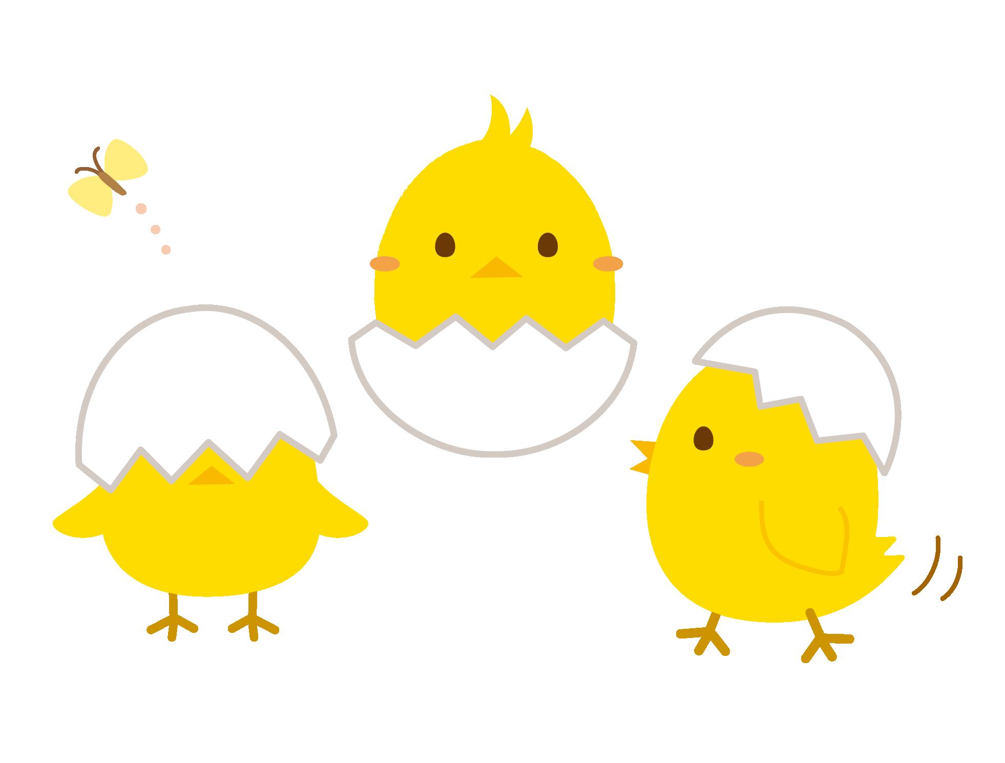 3羽のヒヨコのイラスト