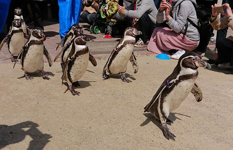 ペンギン水族館パレード