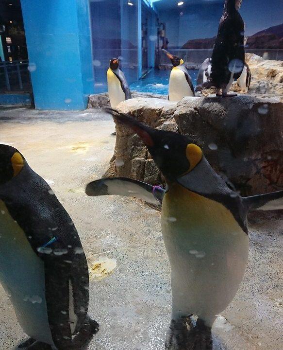 ペンギンプール